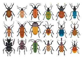 Conjunto de escarabajos aislado sobre fondo blanco. vector