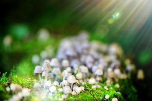 Seta hongo natural en la naturaleza verde foto