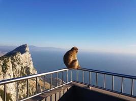 Magot macaca monos Sylvanus macaca monos en Gibraltar foto
