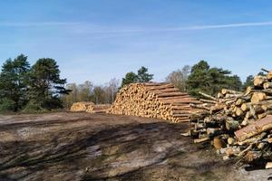 Forestry in the nature reserve Fischbeker Heide photo