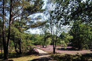 En la reserva natural fischbeker heide junto a Hamburgo, Alemania foto