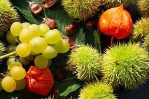 los frutos de la castaña espinosa maduran en otoño foto