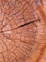 Corte seco y agrietado de un tronco de árbol. foto