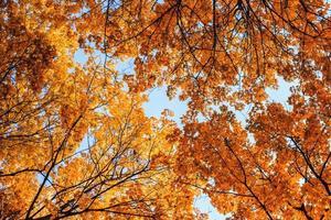 Autumn leaves on blue sky background photo
