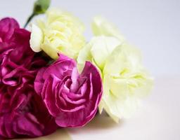 claveles de color rosa púrpura sobre un fondo blanco lila. foto
