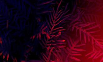Tropical black light glowing leaves. photo