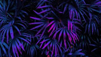 tropical glowing leaves. photo