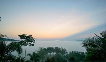 niebla de la mañana sobre el fértil bosque. el cielo de la mañana, nubes anaranjadas. foto