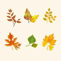 Set of Autumn Leaves icons vector