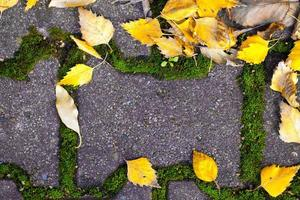 Autumn Fall Dry Leaves Seasonal Flora Concept photo