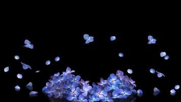 explosion de pétales d'hydényia. rendu 3D avec cache alpha. video