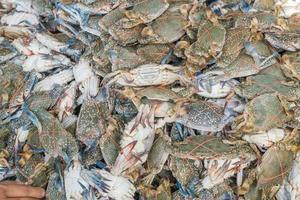 Fresh blue crabs at the market photo