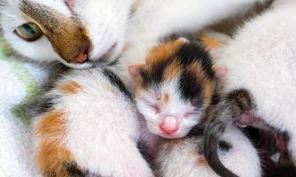 Cute Sweet Pet Animal Kitty and Mom Cat photo