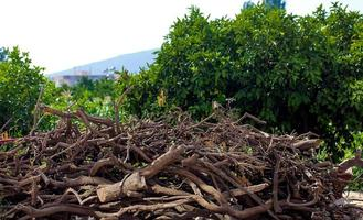 Huge Pile of Cut Woods Logs photo
