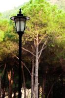 Decorative Street Lamp in the Forest photo