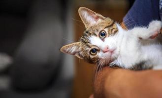 Sweet Animal Pet Cat photo