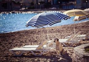 el perro cerca de la playa en el suelo. foto