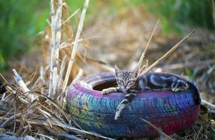 Sweet Animal Cat on a Car Wheel photo
