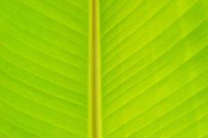 Cerrar textura de fondo de hoja de plátano foto