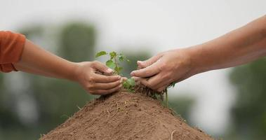 People Hand Planting Young Tree video
