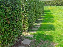 Shadows of square-shaped shrubs standing in a row photo