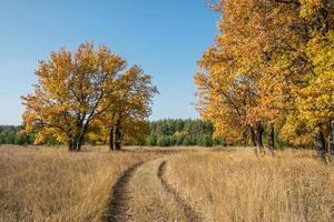 Dirt road through a field among oak trees in the autumn season. photo
