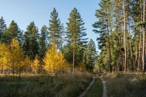 camino a través del bosque de otoño en el parque en un día claro, cálido y soleado. foto