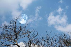 Luna azul llena silueta trasera suave nube seca árbol branck en el cielo foto