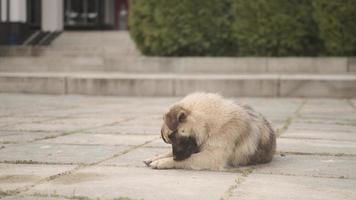 Dog on the ground photo