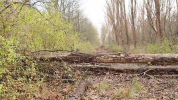 Pripyat, Chernobyl, Ukraine, Nov 22, 2020 - Overgrown vegetation in Chernobyl photo