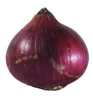 Onion isolated on a white background photo