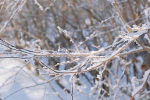 Seca la rama de un árbol marrón en el frío cubierto de escarcha y nieve blanca foto