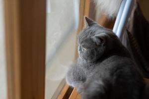 Primer plano de un gato en el suelo, animal doméstico foto
