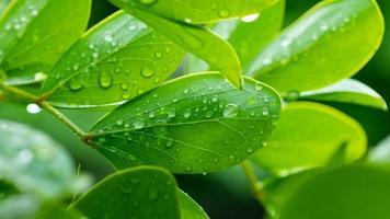 agua sobre fondo de licencia, naturaleza de hoja verde foto