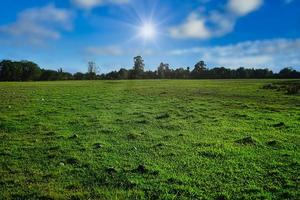 Natural landscape with a green field photo