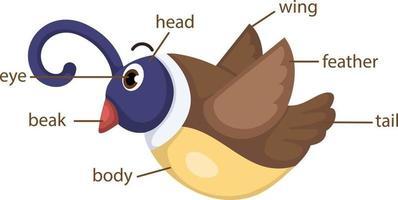 bird vocabulary part of body vector