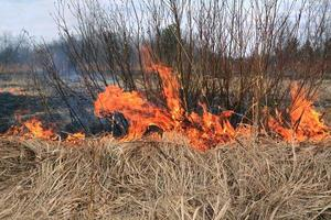 Controlled fire to remove dry bushes photo