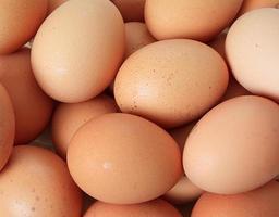 Brown chicken egg photo