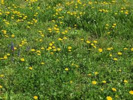 Grass meadow weed photo
