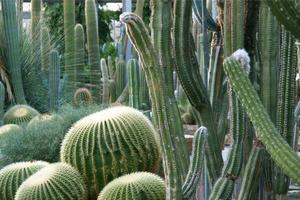 fondo de plantas de cactus foto
