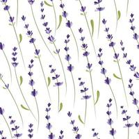 Seamless pattern with lavender branches. vector