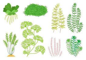 Conjunto de plantas de acuario de dibujos animados lindo. naturaleza de la vida silvestre vector