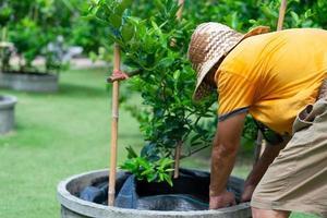 farmer put black plastic sheet to cover soil under lime tree photo