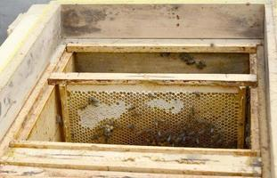 Winged bee slowly flies to beehive collect nectar on private apiary photo