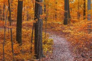 Trees with fall foliage in rural Michigan state photo