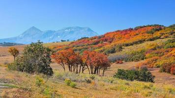 Colorful autumn trees in San Juan Mountains, Colorado photo