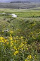 Meadow of wild flowers by Brush creek near Crested Butte photo