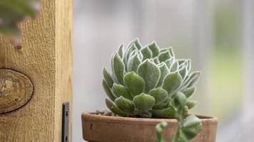 Small succulent plant in the pot photo