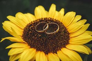 Dos anillos de bodas de oro se encuentran en un gran girasol foto