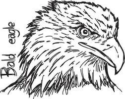 bald eagle's head - vector illustration sketch hand drawn